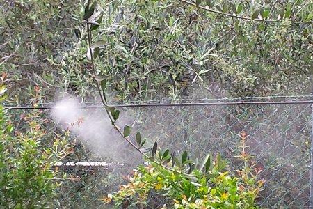 Impianto di nebulizzazione antizanzare per giardini prezzo